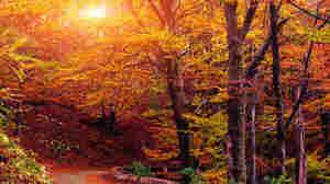 Autumn Serenade: The Fall Music Puzzler